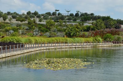 Ariel Sharon Park's tranquil lake, complete with floating lily pads and a border built from recycled concrete, is a far cry from the waters of the former landfill that were once referred to as 'garbage juice' (Photo: James S. Galfund)